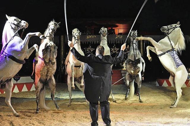 Pferde, Clowns und Akrobaten im Zirkuszelt