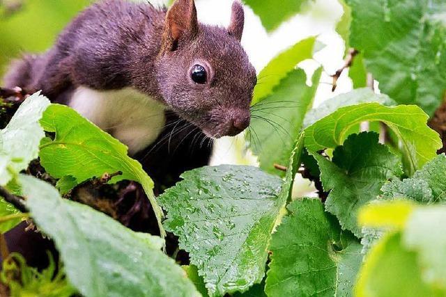 Staatswald wird mit FSC-Ökosiegel ausgezeichnet