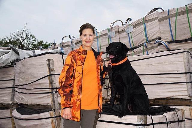 Wie Hunde Holz-Schädlinge aus Asien erschnüffeln