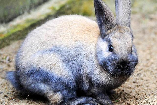 Einbruch beim Kleintierzuchtverein: 10 Kaninchen geklaut