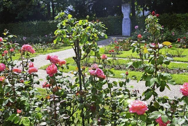 Im Rosengarten im Grütt blühen 198 Sorten