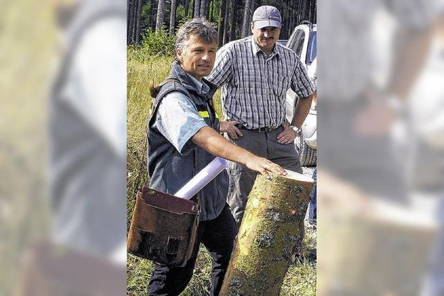 Wald spült Geld in die Stadtkasse