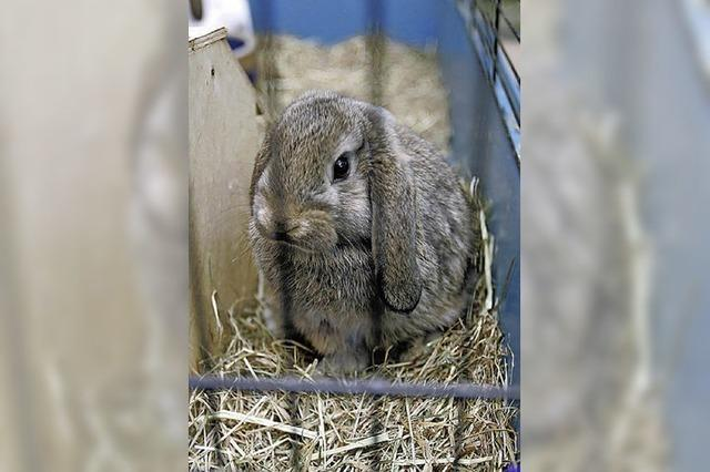 Kaninchen soll es besser gehen