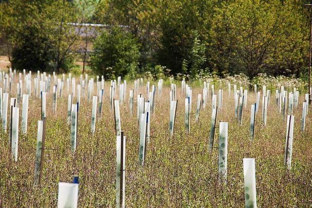 Energiedienst kommt für die jungen Bäume auf