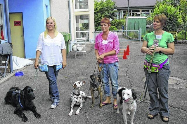 Hunde helfen Behinderten