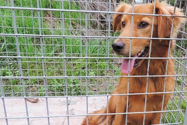 Hund ist wochenlang auf der Flucht – Hightech-Falle schnappt zu