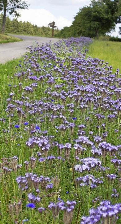 Blühstreifen an Ackerrändern  tragen zur biologischen Vielfalt bei.  | Foto: Wilfried Dieckmann