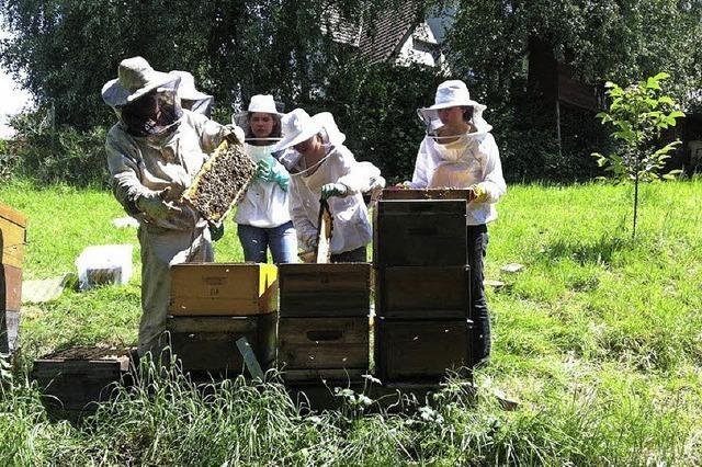 Bienen machen keine Ferien