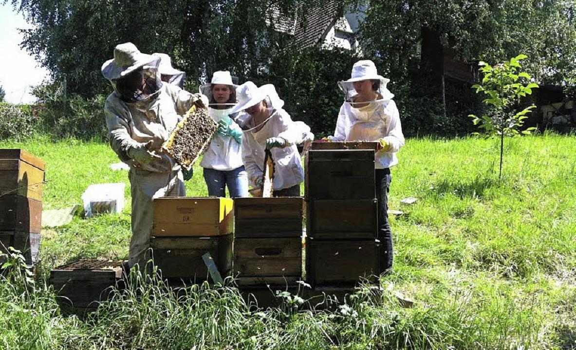 Bienen machen keien Ferien, und so war...en Ferien gucken müssen sie auch mal.   | Foto: Privat
