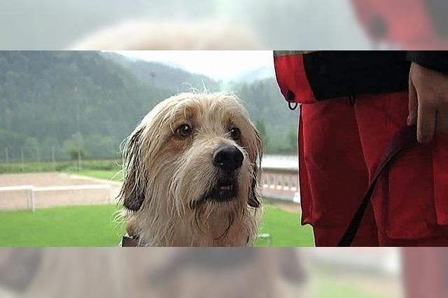 Einsatzkräfte übten mit Rettungshundestaffel