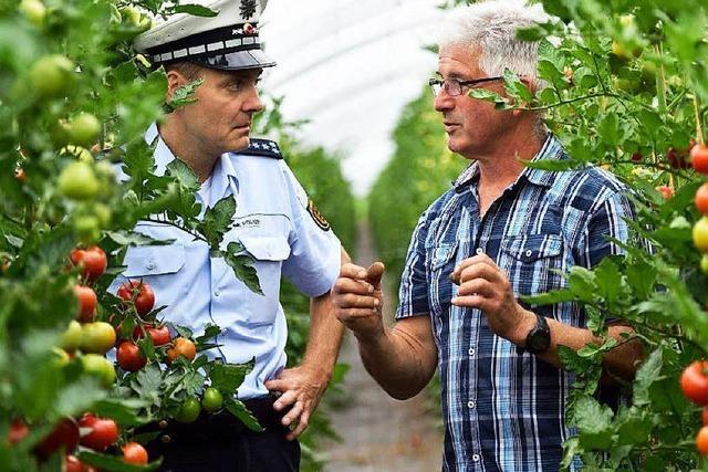 Obstbauern ärgern sich über Mundraub – Polizei im Einsatz