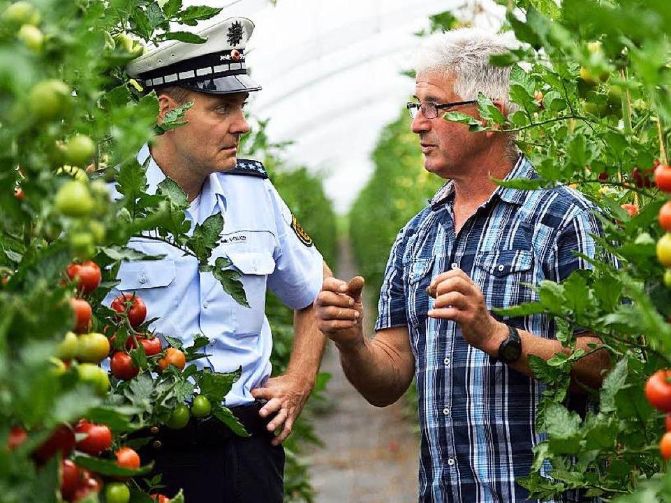 Polizist Alexander Willwert und Gärtner Hans Hornig zwischen Tomatenstauden     Foto: dpa