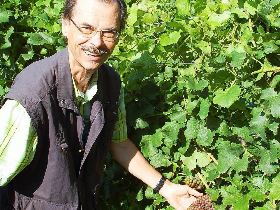 Weinbauberater Bernhard Ganter in den ...it ist alles noch im grünen Bereich.    | Foto: hubert röderer