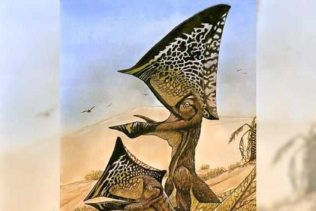 Unbekannter Flugsaurier in Brasilien entdeckt