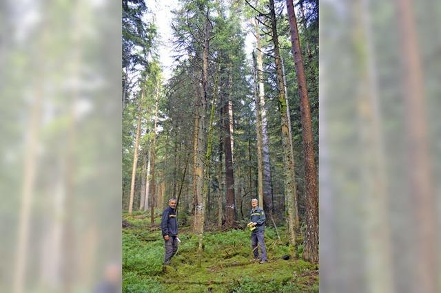 FSC-Ökosiegel für den Staatswald