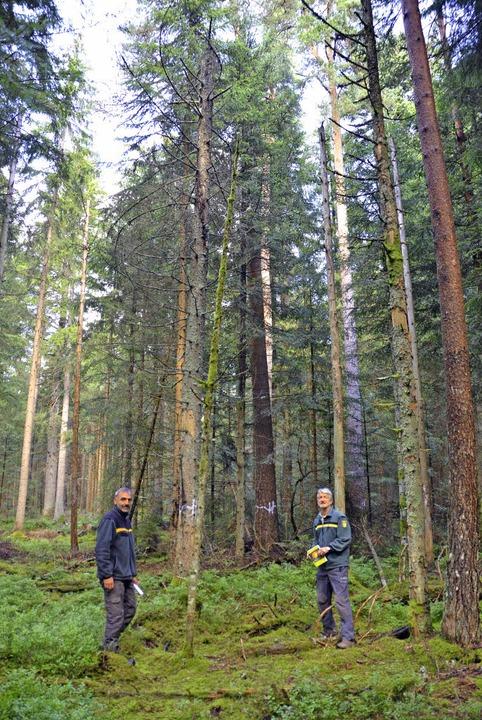 Eine Bannwald-Insel im Staatswald bei ...dbert Zapf (rechts) und Rainer Epple.   | Foto: jul