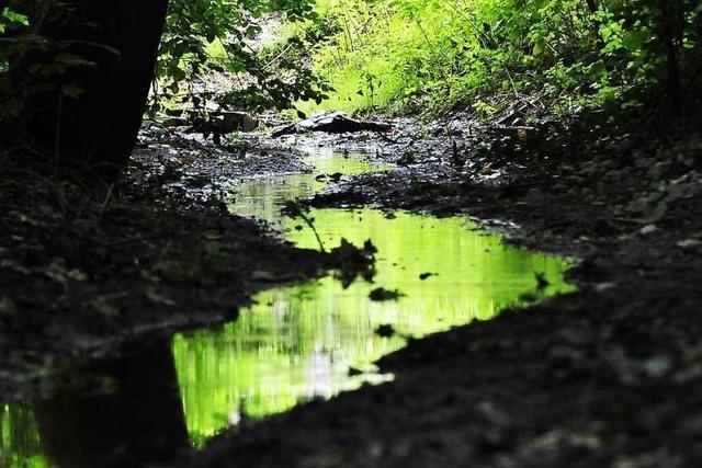 Grundwasser im Keller: Tut die Stadtverwaltung zu wenig?