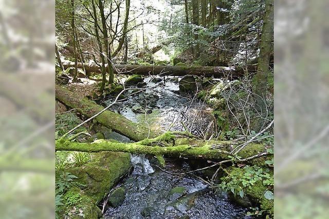 Gebannter Wald, gebannter Halt
