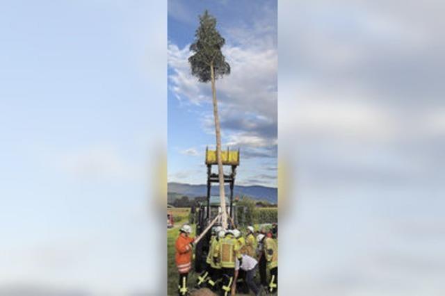 Tannenbaum für Benjamin Borgas
