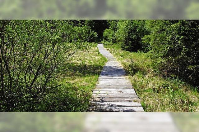 Wanderung rund um das Tiefenhäuserner Moor