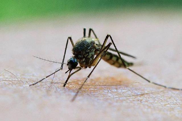 Mückenjäger Becker: Das ist ein Extrem-Jahr am Oberrhein