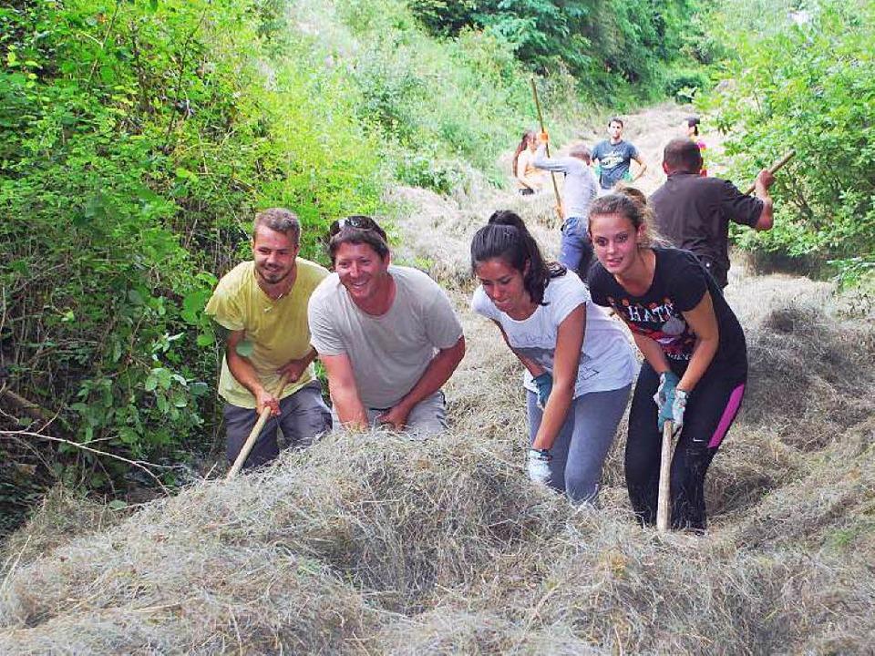 Im Rahmen des SCI-Sommercamps in Schel... die Teilnehmer auch bei der Heuernte.  | Foto: Benjamin Bohn