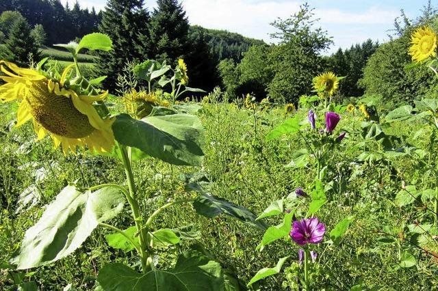 Wildblumen entfalten ihre Pracht