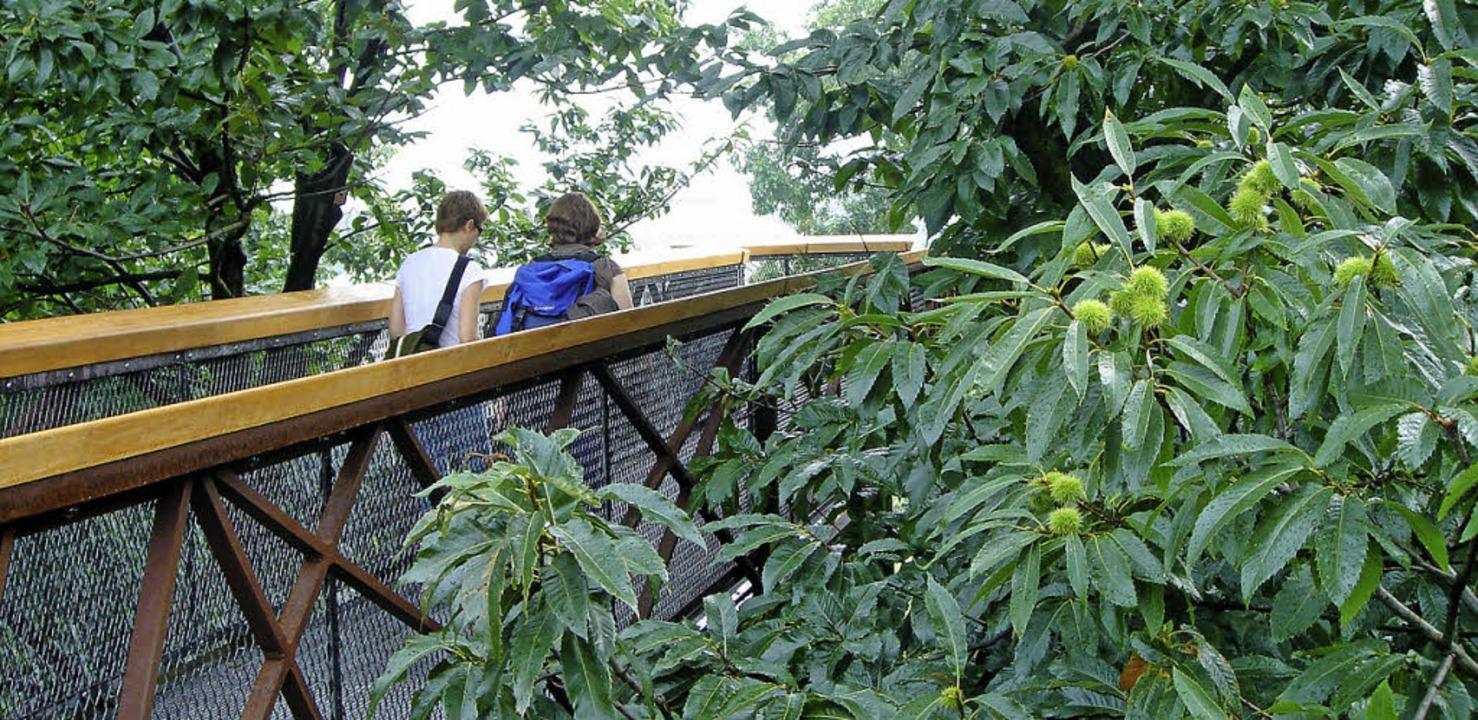 Einmal die Bäume von der Krone aus betrachten – in Kew möglich.  | Foto: Thorsten_Wiese
