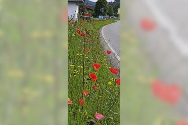 Blumenpracht am Straßenrand