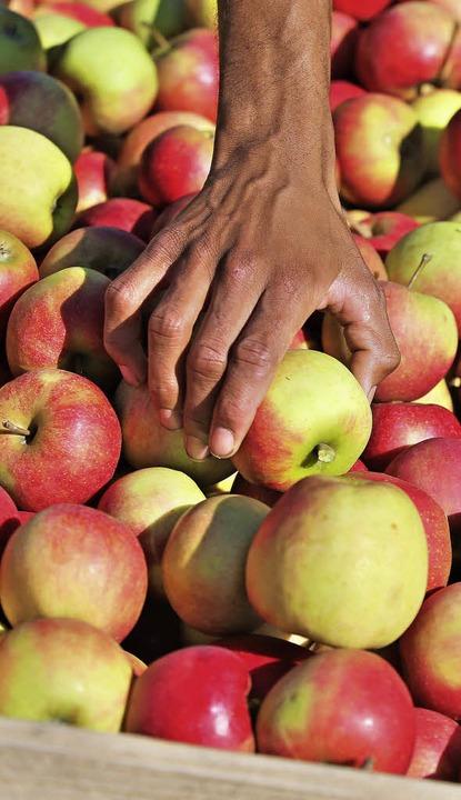 Russland importiert keine Äpfel mehr aus der EU.   | Foto: DPA