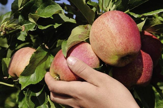 Äpfel wachsen wie noch nie