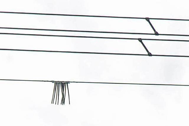 Markierungen an Stromleitungen sollen Vögel schützen
