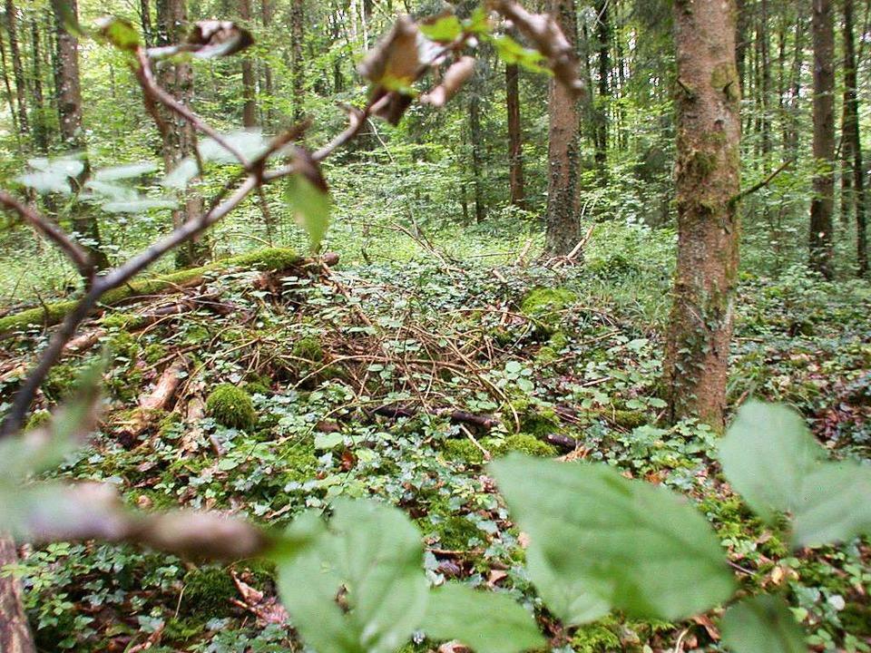 """Verborgen im Wald ruhen hier  zwei noc...den Heiden Gräbern"""" bekannt ist.    Foto: André Hönig"""