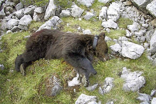 Bärenmutter in Italien getötet