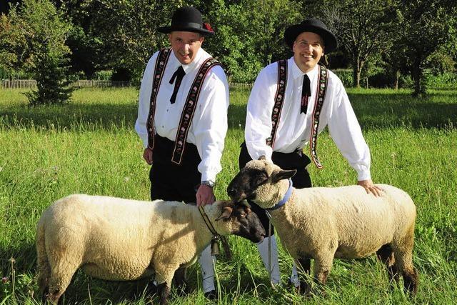 Almabtrieb und Juxturnier in Simonswald: Viecher und Bauernolympiade