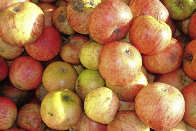 Wohin mit den vielen Äpfeln?