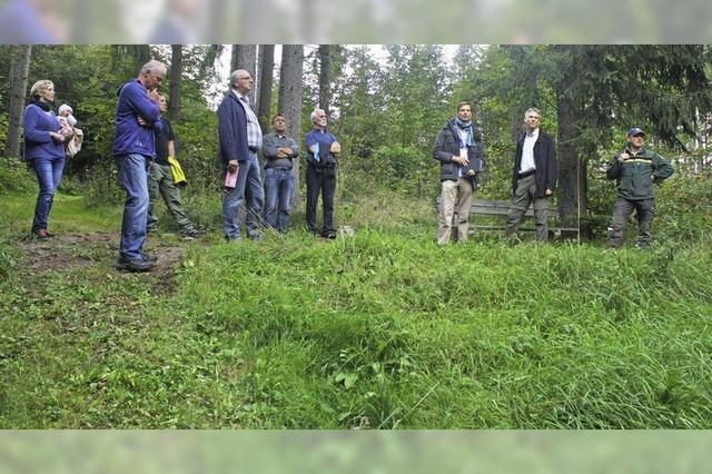 Auf dem Kuhberg soll ein Waldgarten entstehen