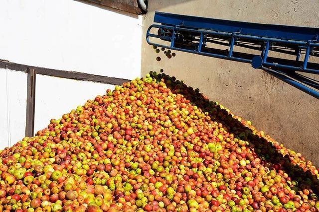 Russisches Einfuhrverbot: Obstbauern bleiben auf Rekordernte sitzen