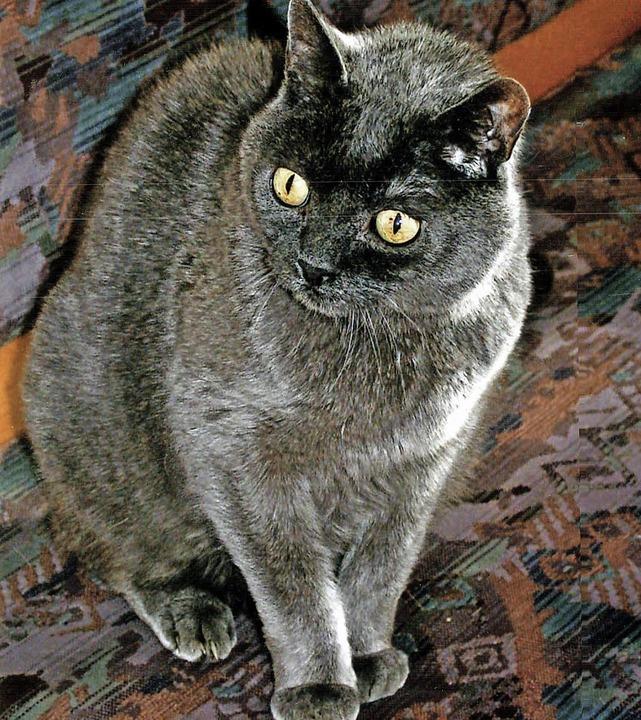Wenn besonders schöne Katzen vermisst ...zumindest nicht ausgeschlossen werden.  | Foto: Repro: Dieckmann