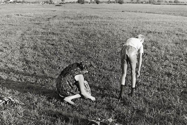 Pilzsuche war vor 50 Jahren in der Stadt noch möglich