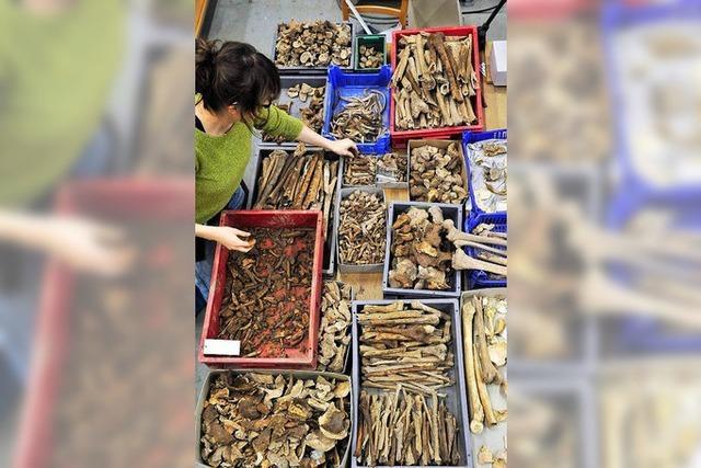 Experten untersuchen Grabfunde vom Freiburger Münsterplatz