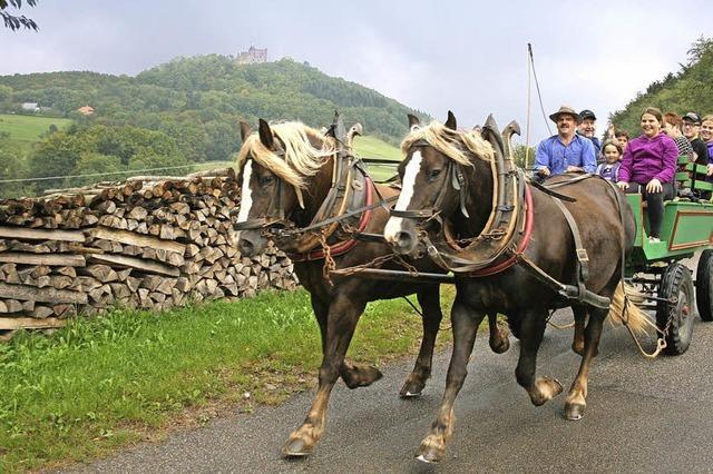 Erlebnisbauernhof Kopf in Seelbach bietet Kutschfahrten an