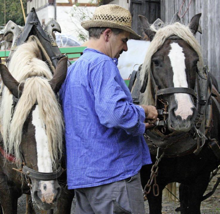 Angeschirrt: Ludwig Kopf macht die Pferde bereit.  | Foto: Theodor Weber