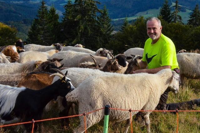 Wie Schäfer Weltle mit seiner Herde die Landschaft am Belchen pflegt