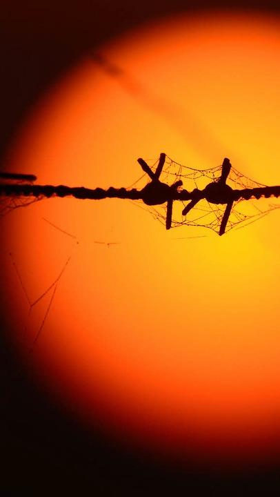 Spinnweben – ein Kenzeichen des Altweibersommers     Foto: dpa