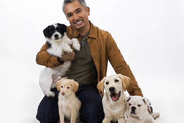 Hundetrainer Cesar Millan coacht die Vierbeiner der Stars
