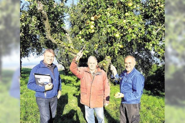 Das Obst eines ganzen Baumes wird für zwei Euro versteigert