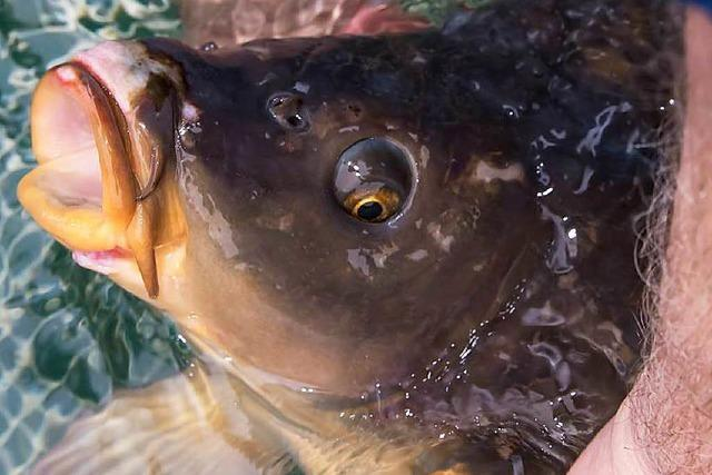 Fische gequält: Strafbefehle gegen zwei Personen erlassen