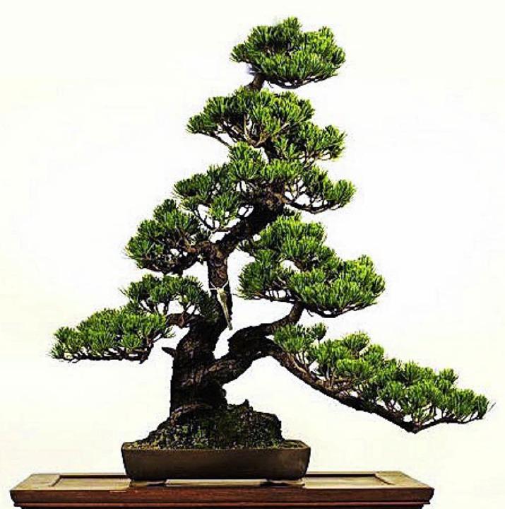 Große Kunst:  Bonsaibäume  | Foto: ZVG