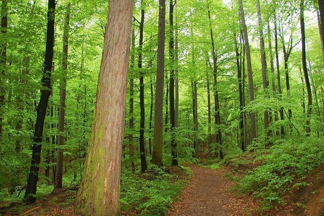 Stadtwald bringt 100 000 Euro Gewinn
